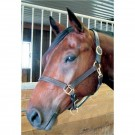 Bromont Basics Classic Stable Halter -Yearling
