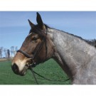 HDR Advantage Draft Bridle