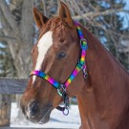 Nylon Metallic Rainbow Halter - Pony
