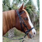 Bitless Beta Bridle™ by Dr. Robert Cook