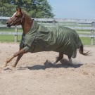 Clover Rainsheet by Canadian Horsewear